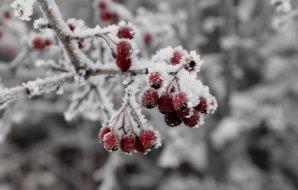 zima drugie dno